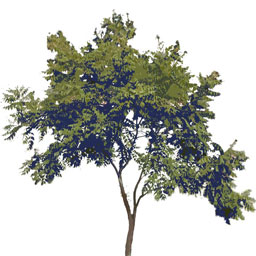 Freigestellte Bäume - Download
